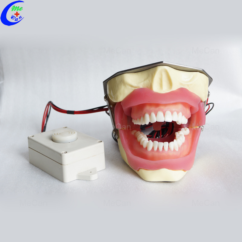 Dental Tooth Model, Anesthesia Extraction Model with Buzzer