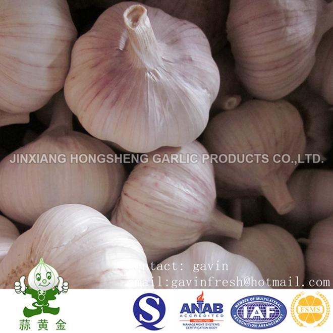 20 Kg Mesh Bag Normal White Garlic 4.5cm From Jinxiang
