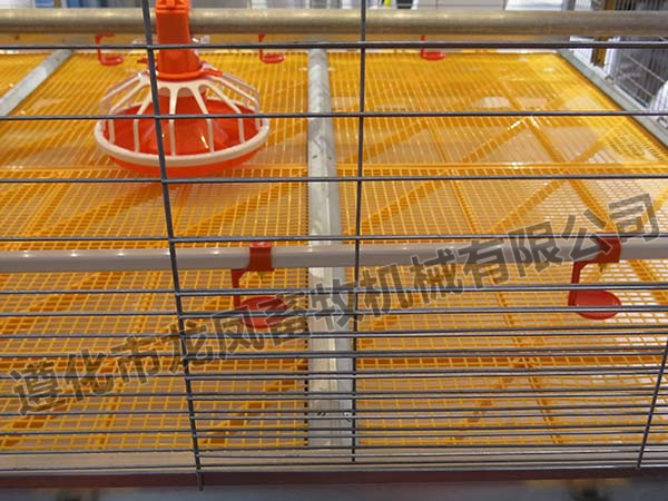 Automatic Poultry Feeder and Nipple Drinker for Chicken