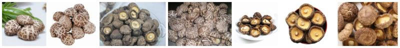 New Crop Dried Mushroom, Xianggu Juncaoshii-Takee Vegetables