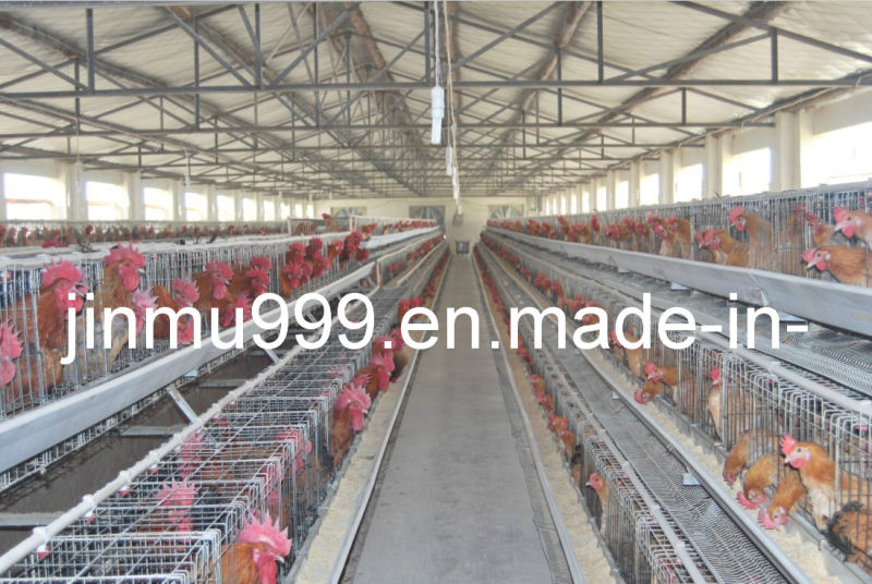 a Type Automatic Poultry Farm Equipment Layer Chicken Cage