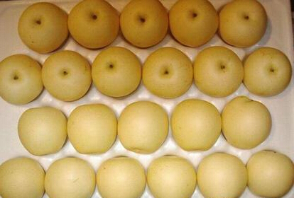 Fresh Huang Guan/Crown Pear with Good Quality on Sale
