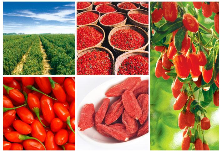 Chinese High Quality Dried Goji Berry