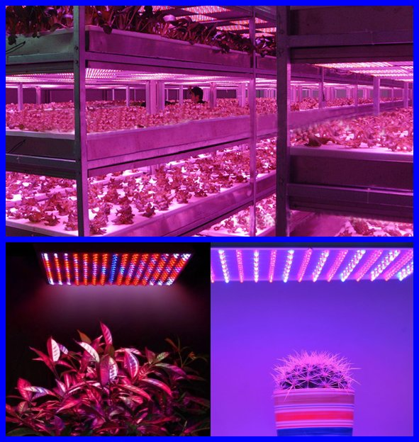 225LED AC85~265V 14W Tissue Culture Grow Panel Light