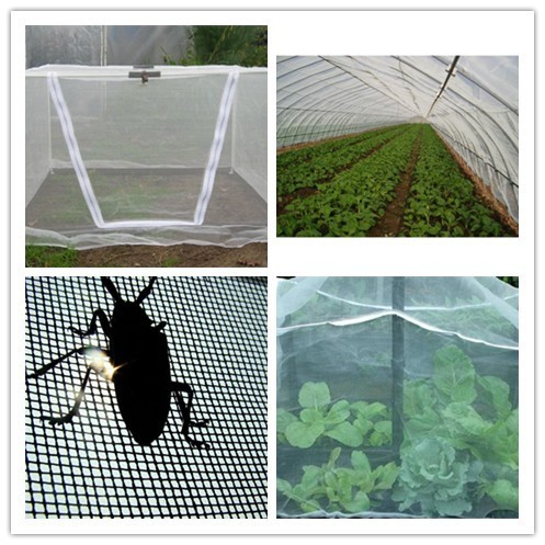Insect Proof Mesh