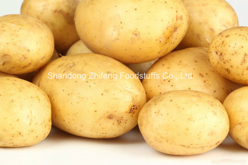 150g and up New Crop Potato