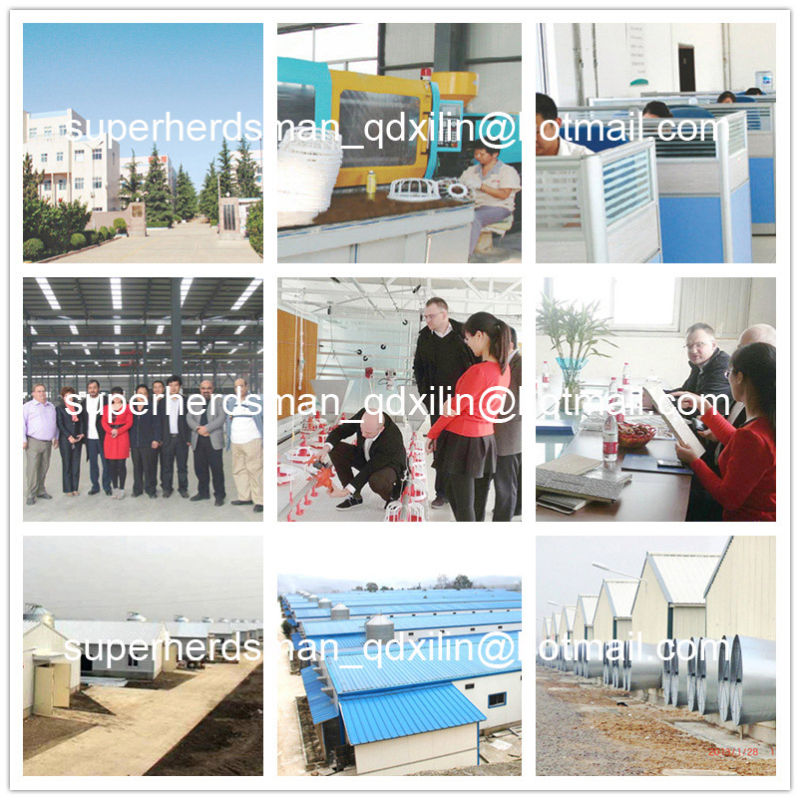 Full Set Automatic Poultry Equipment for Broiler Production Farm