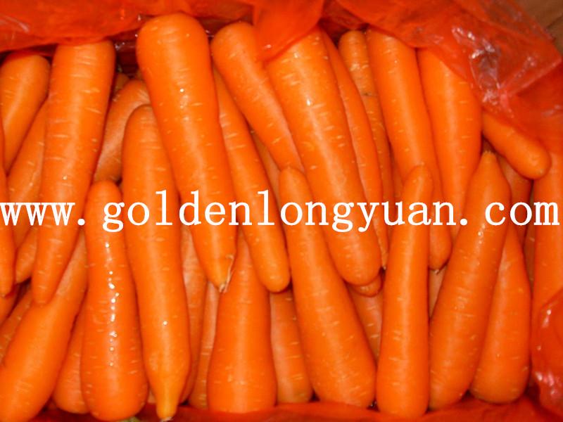 Shandong Fresh Carrot New Crop
