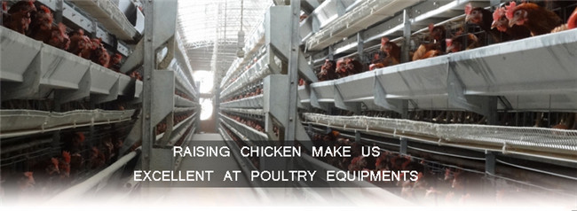Chicken Cage System Automatic Chicken Feeder for Poultry