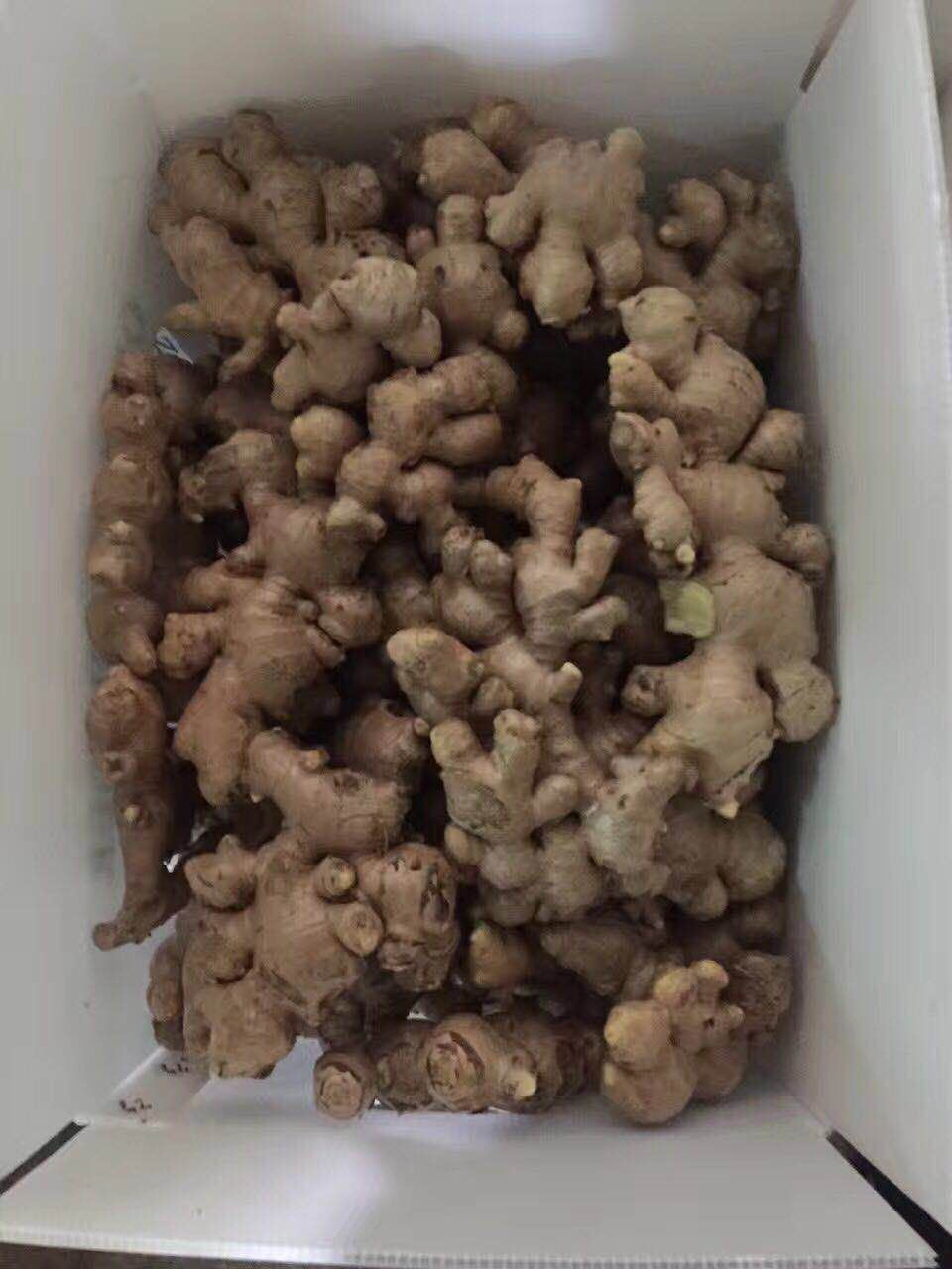 Chinese No Pesticide Fresh Organic Ginger