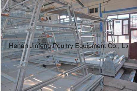 Hot High Quality Layer Chicken Farm Poultry Equipment From China
