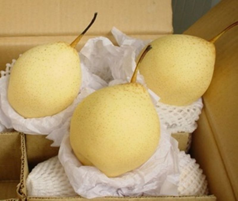 2016 Year 100% Organic Fresh Ya Pear on Sale