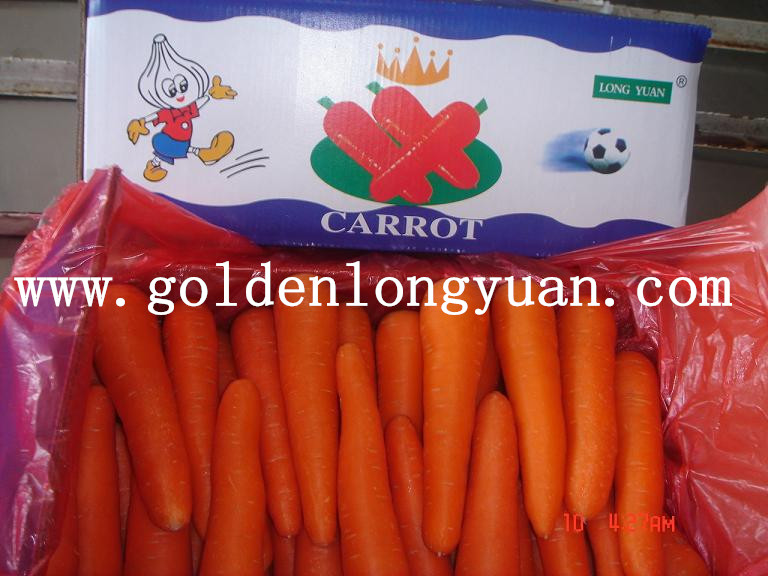 Fresh Red Carrot From Shandong Area
