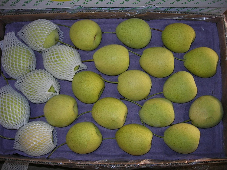 Fresh Shandong Pear New Crop Green Color