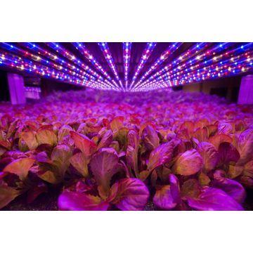 Waterproof IP67 LED High Bay Power Greenhouse Indoor Garden LED Grow Light