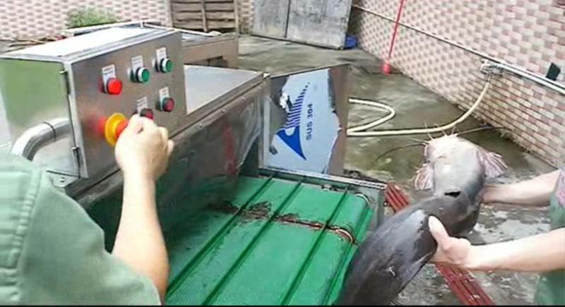 Fish Head Cutting Machine Fish Head Removing Machine