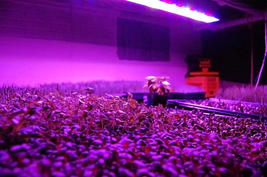 300W Plant Lighting LED Growing Hydroponic