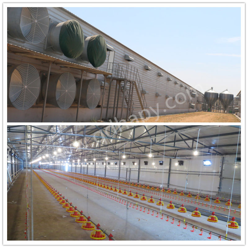 Poultry Shed with Automatic Chicken Farming Equipment