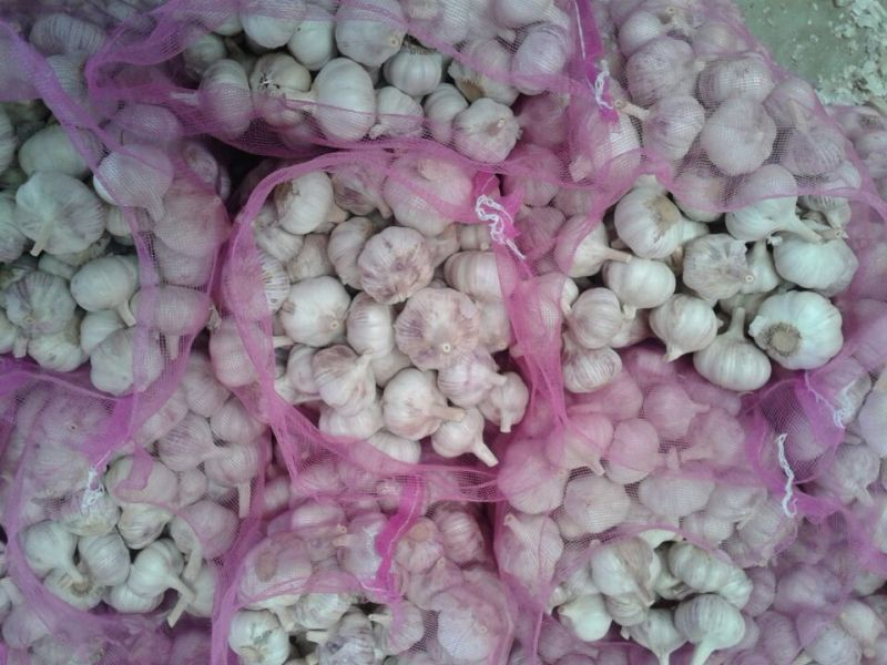 New Crop Normal White Garlic