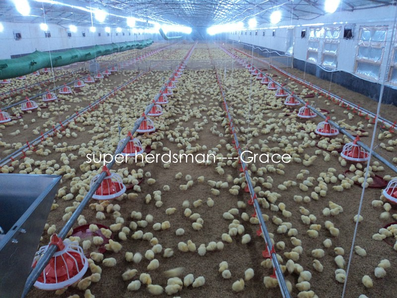 Full Set Environment Controlled Chicken Shed Machinery for Broiler