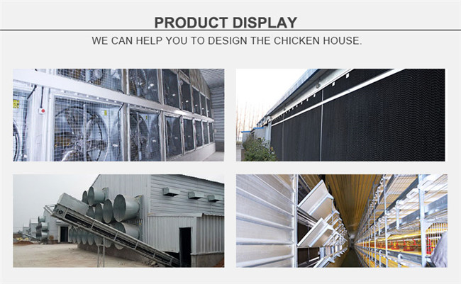 Chicken Farm Ventilation Fan System for Layer Raising