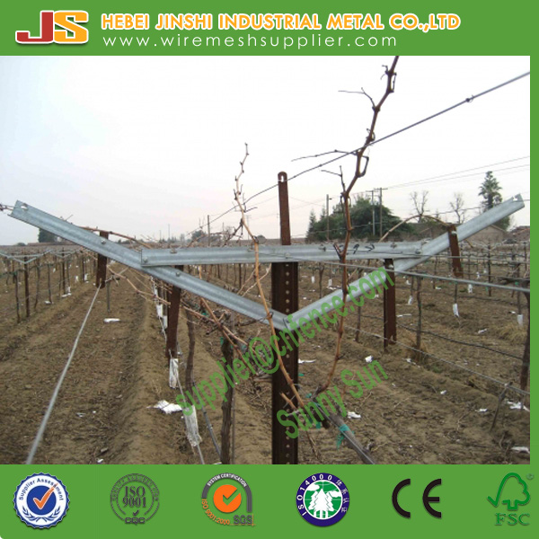 Galvanized Y Shaped Gable Vineyard Trellis Vertical Rail Line Post