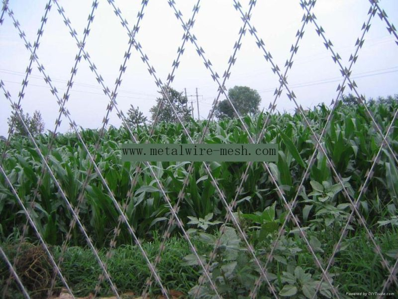 Welded Razor Wire Mesh