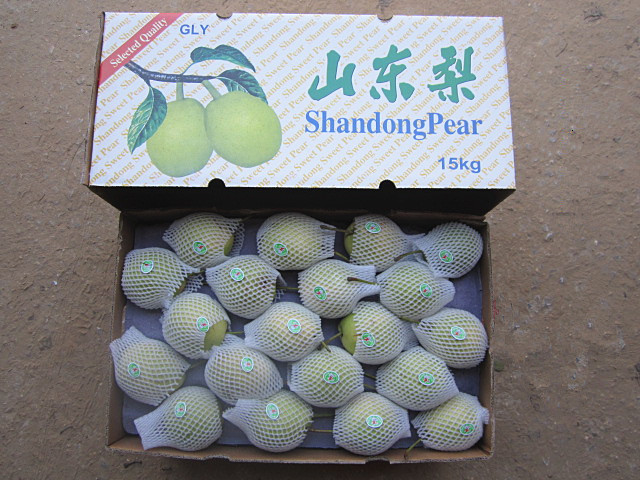 Selecting Quality Fresh Green Shandong Pear