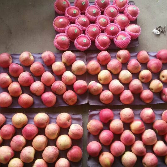Chinese Fresh Qinguan Apple