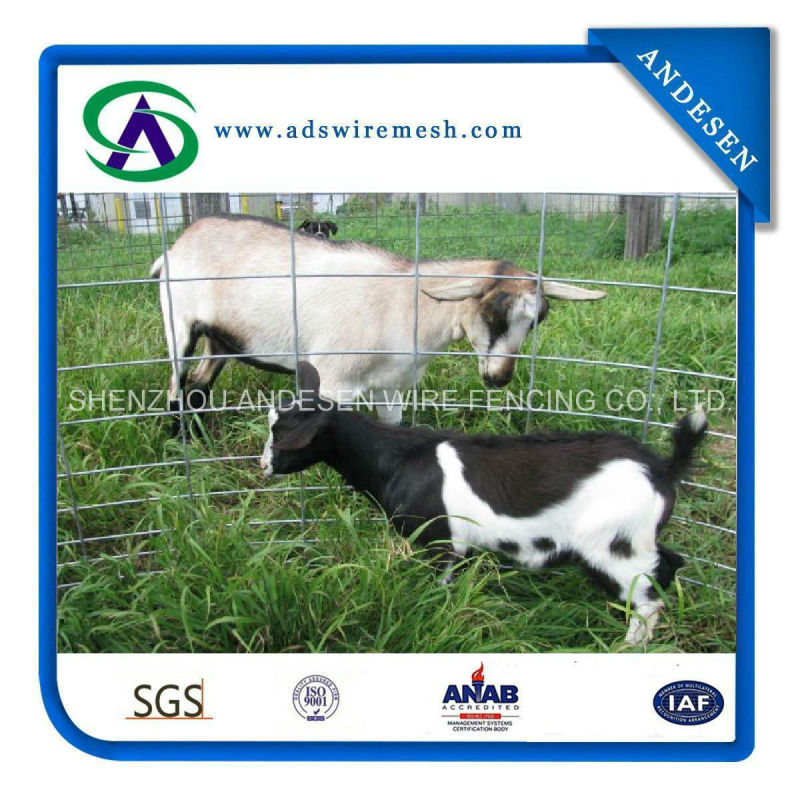 Golden Supplier Utility Panels/Welded Wire Livestock Panels