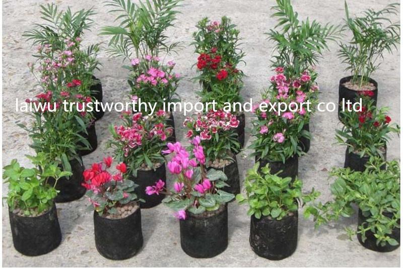 Pet Flower Planting Geo Bag