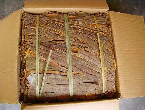 Chinese Cinamomum Cassia, Cinnamon for Sale