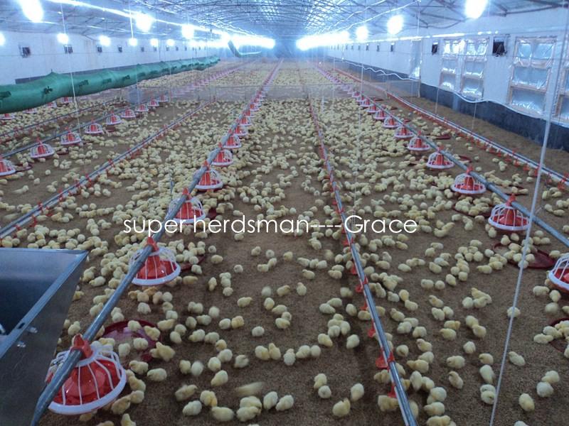 Chicken Drinking Line for Broiler/Breeder/Layer Chickens