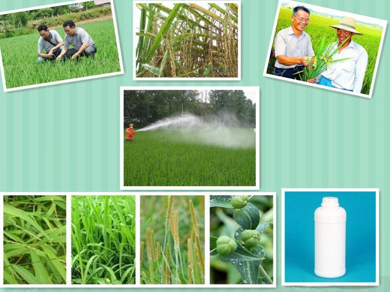 Insecticidal Cockroaches Pesticide Control 40% Ec Trichlorfon Trichlorphon