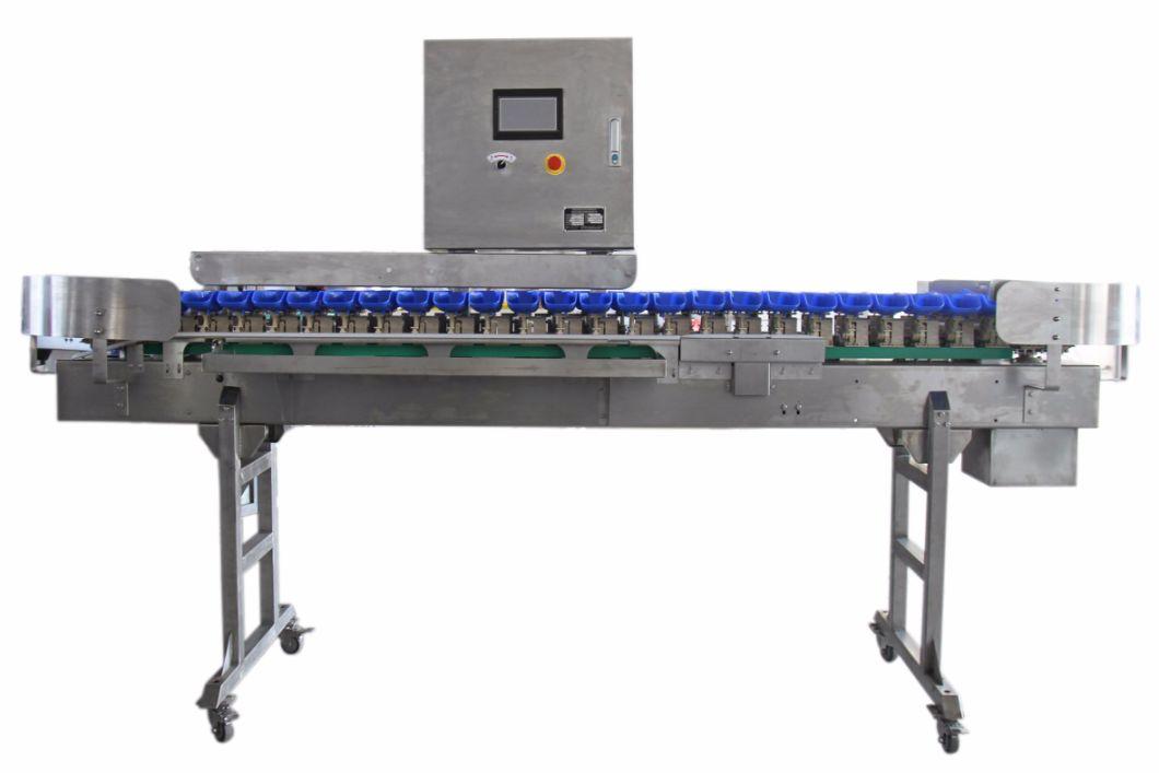 Automatic Weight Grading Sorting Machine