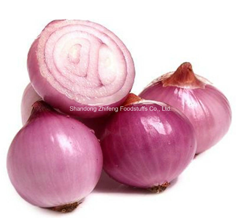 Fresh Red Onion in China