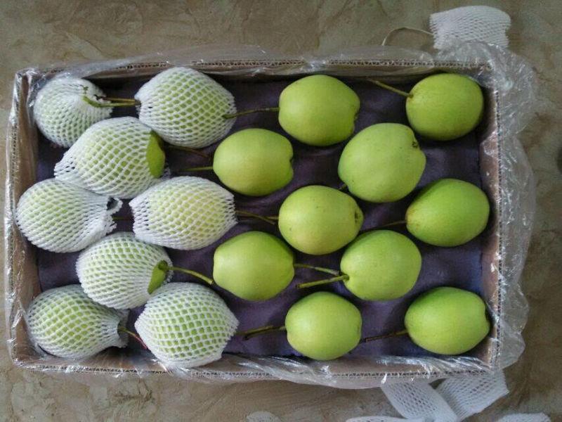 New Season Green Shandong Pear