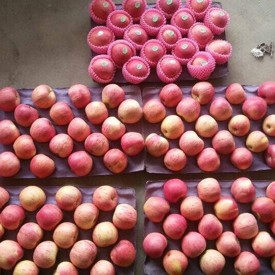 New Crop of Qinguan Apple Is Coming Soon