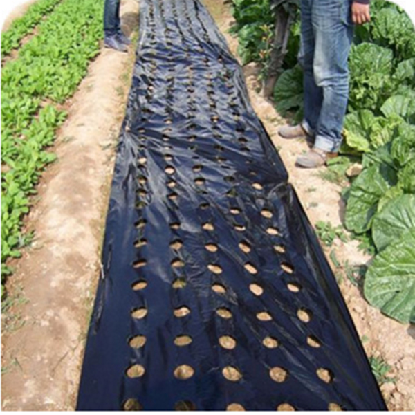 PE Mulching Film with Hole