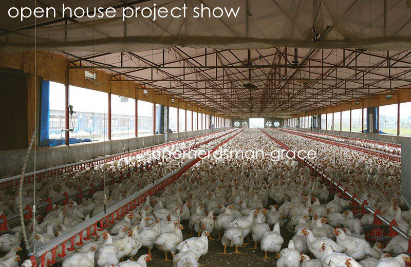 Automatic Chicken Farm Equipment for Broiler House