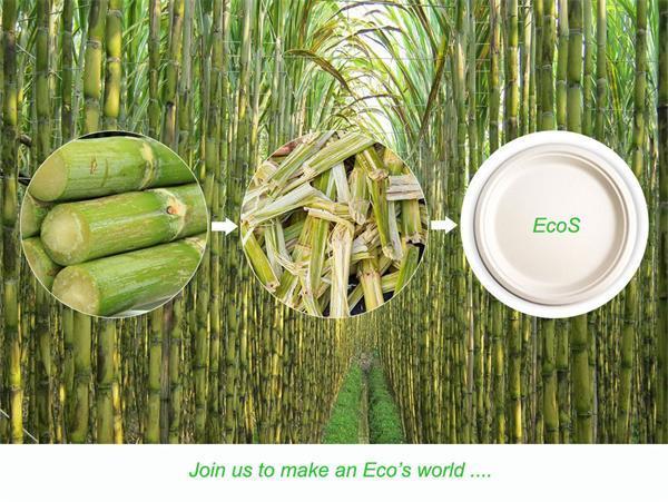 Eco-Friendly Biodegradable Compostable Disposable Paper Pulp Bagasse 10