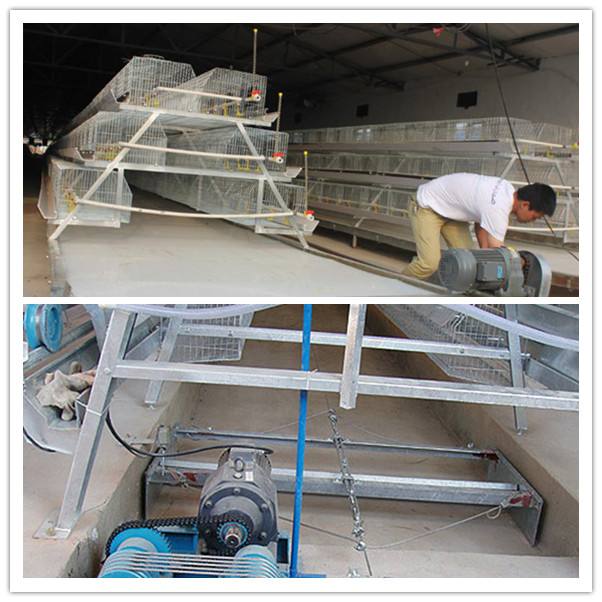 Silver Star Factory Outlet Price Poultry Farm Egg Layer Chicken Cages