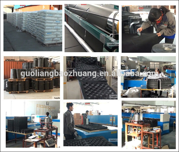 for Display in Market or Protection in Transport Blister Process Type Plastic Liner for Fruit Packing