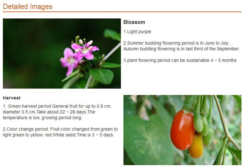 Medlar Organic Wolfberry Himalayan Goji Berry