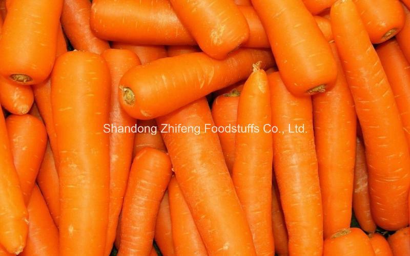 Exporting New Crop Natural Carrot