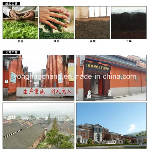 China Hunan Baishaxi Qiangliang Dark Tea Organic Tea/ Health Tea/ Slimming Tea