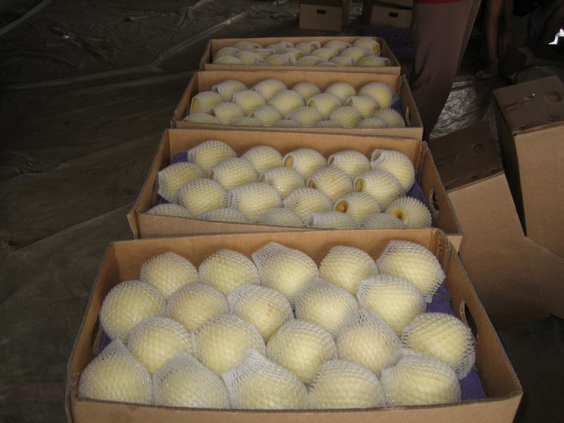 Fresh New Season Golden Pear From China