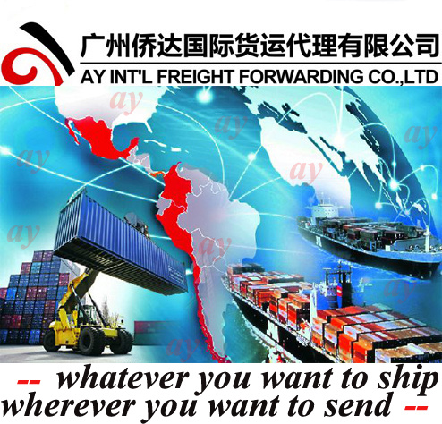 Sea Freight Ocean Freight Container Shipping to Curitiba