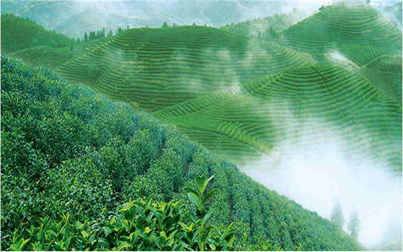 Chu Talents-Lu Yu Brick Tea