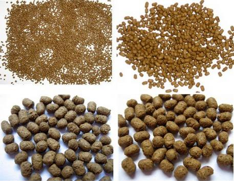 Powder Fish Feed From Fish Meal Protein 50%